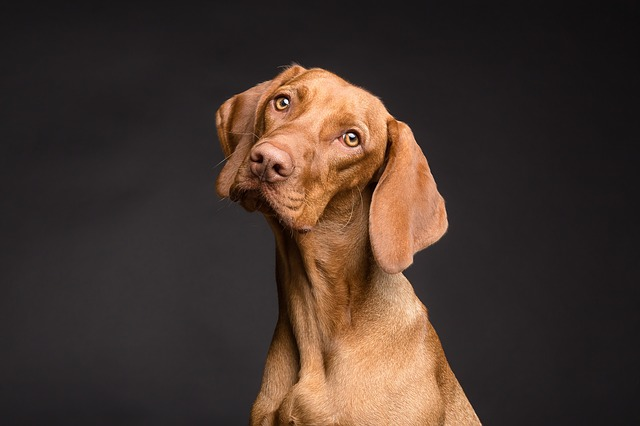 Un chien avec un regard interrogateur.